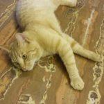 Rogosi mõisa kass  saalipõrandal
