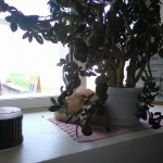 Loomakese puhkehetk Rogosi mõisa aknal